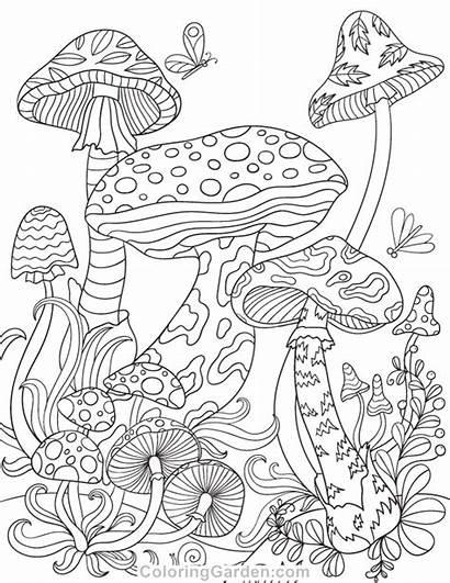 Coloring Pages Mushroom Mushrooms Magic Colouring Adult