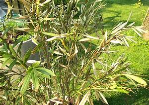 Pflege Von Oleander : oleander erfroren was tun ~ Eleganceandgraceweddings.com Haus und Dekorationen
