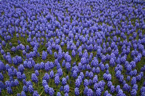fiori da giardino perenni foto fiori da giardino perenni e per le diverse stagioni foto
