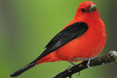 small kitchen decorating passerine definition what are perching birds