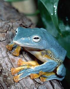 Best 25+ Frogs ideas on Pinterest | Animated frog, Cute ...