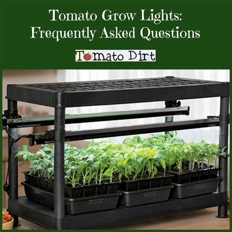 best grow lights for seedlings tomato grow lights for seedlings frequently asked questions