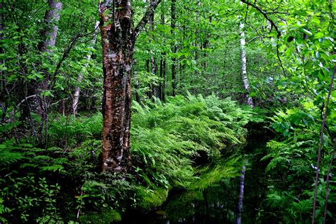 Our Initiatives - Forest Trends