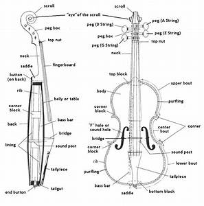 1000  Images About Parts Of The Violin On Pinterest