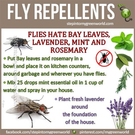 How To Trap House Flies by 17 Best Ideas About Fly Traps On