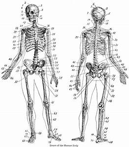 48 Skull Bones Anatomy Coloring Pages  Skull Anatomy