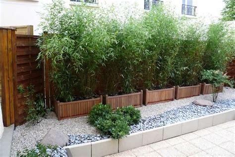 piante da siepe in vaso sempreverdi siepe in vaso consigli alla coltivazione idee green