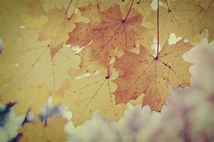 Vintage Fall Backgrounds With Quotes. QuotesGram