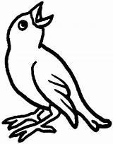 Bird Coloring Pages Bulletin Board Library Boards Preschool Tweeting Bing Rag Quilt Patterns sketch template