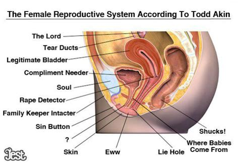 the female reproductive system according to todd akin jessica bluemke friendly atheist patheos