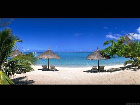 fond ecran plage palmier parasol chaise longue 1 pictures