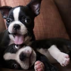 Low Shed Dog Breeds by 20 Cutest Dog Breeds Herinterest Com