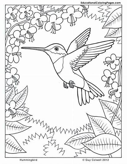 Coloring Nature Pages Hummingbird Flower Animals Colouring