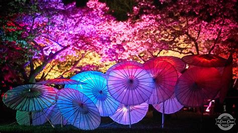 spring lights cancelled vancouver cherry blossom