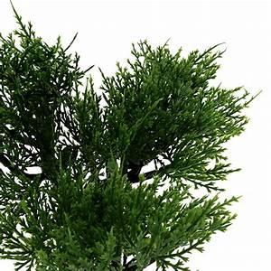 Baum Im Topf : bonsai baum im topf h20cm preiswert online kaufen ~ A.2002-acura-tl-radio.info Haus und Dekorationen