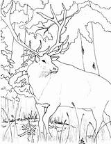 Coloring Elk Mountain Printable Rocky Sheets Animals Abc Mountains Library Clipart Adults Popular Coloringhome sketch template