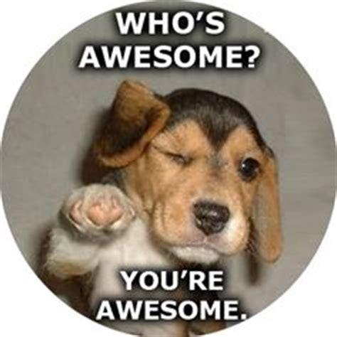 Fucking Awesome Meme - 1000 images about awesomeness you re awesome on pinterest i m awesome i am awesome and you