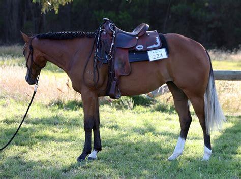 quarter horses 2009