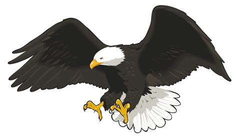 Clip Eagle Bald Eagle Clipart Transparent Pencil And In Color Bald