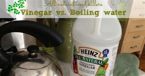 natural weed killer vinegar  hot water