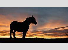 Bildergalerie Die schönsten Pferdebilder für WhatsApp