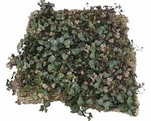 Efeu Pflanzen Kaufen : b schungsbegr nungs matte efeu helix 100 x 100 cm 5er set ~ Michelbontemps.com Haus und Dekorationen