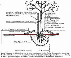 Image Result For Apple Tree Diagram