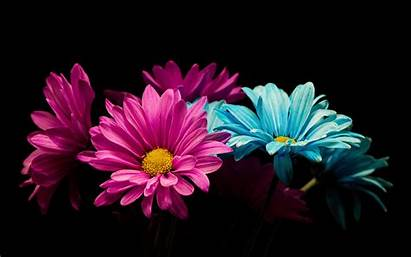 Petals Flowers Colorful 2256 1504 Wallpapers Cyan