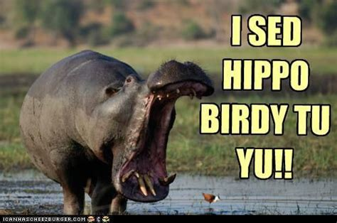 Skeptical Hippo Meme - i sed hippo birdy tu yu i can has cheezburger pinterest funny stuff humor and funny things