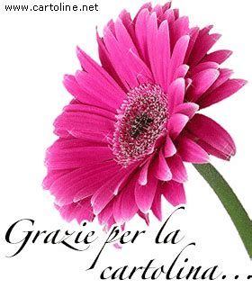 fiori per ringraziare fiore per ringraziare per la cartolina