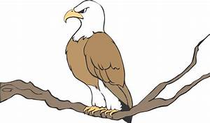 cartoon-eagle-on-branch1 | Maturango Museum