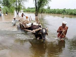 Floods: '150,000 animals have been affected' in Pakistan ...