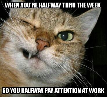 Funny Wednesday Memes - wednesday work meme www pixshark com images galleries with a bite