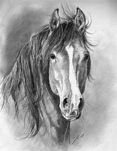 388 best images about Horse Drawings on Pinterest ...