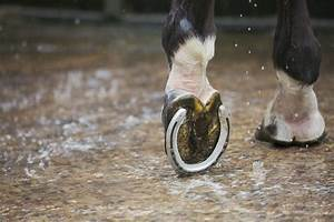 How Often Does Your Horse Need Shoeing