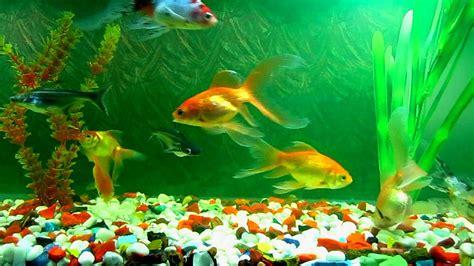 le site du poisson entretien du poisson
