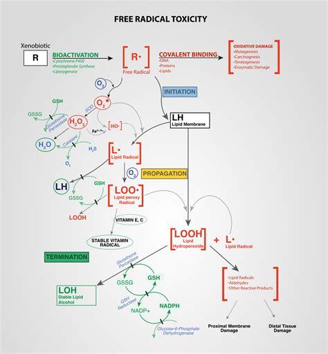 oxidative stress wikipedia