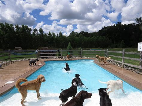 pool pawty   doggy daycare center   funniest