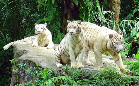 white zoo zoo animal pictures pets and docile