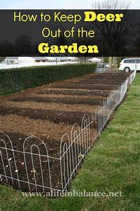 How to keep deer out of the garden home garden pinterest for Keep deer out of garden