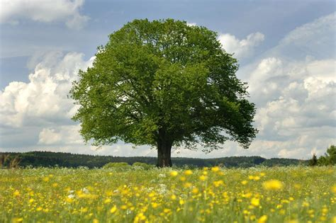 arbre boule liste ooreka