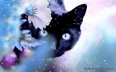 beautiful dark black cat background wallpaper windows