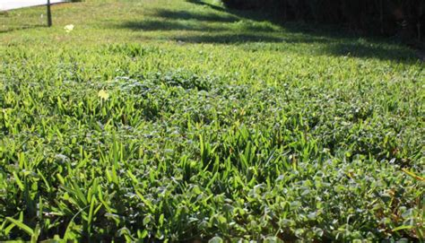 Wie Kann Ich Pilze Im Garten Entfernen by Garten Umgraben Unkraut Entfernen Unkraut Im Garten