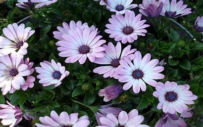 Flowers Resolution Wallpapers 1280 1440