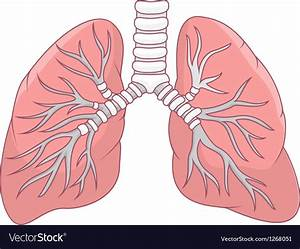Lungs Diagram Simple