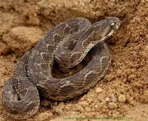 DonZ NetWork: 10 Most Venomous Snake In The World