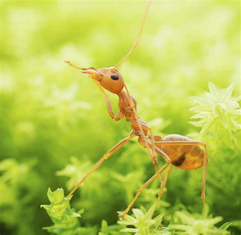 hilft backpulver gegen ameisen tipp gegen hitze schwei 223 f 252 223 e fruchtfliegen und ameisen welt