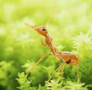 Hausmittel Gegen Ameisen Im Garten : backpulver gegen ameisen mittel gegen ameisen im garten ~ Whattoseeinmadrid.com Haus und Dekorationen