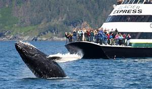 Whale Watching In Alaska – Extreme Outdoor Adventure
