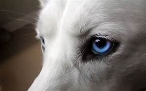 white husky puppies with blue eyes Quotes
